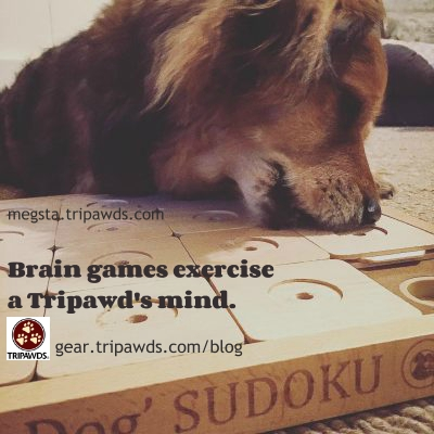 cat and dog brain games