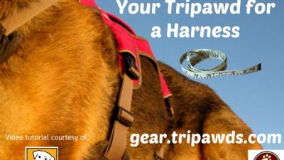 measure tripawd harness