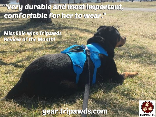 tripawd,webmaster,harness,review,three-legged dog,amputee,tripod,gifts,safety,mobility