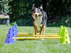 CanineGym Agility Kit