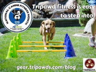 step into tripawd fitness