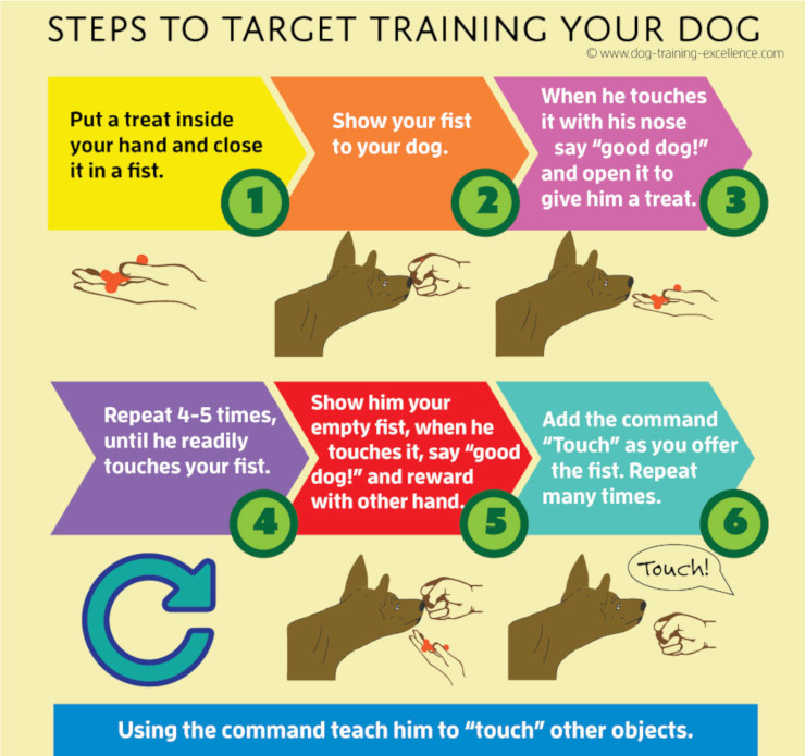 How to Target Train Dogs