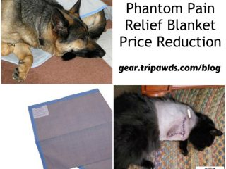Tripawd phantom pain relief