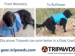Tripawd doggie life jacket