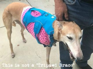 Tripawd dog harness