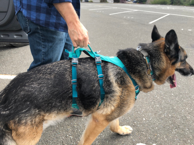Tripawd Flagline Harness support handle