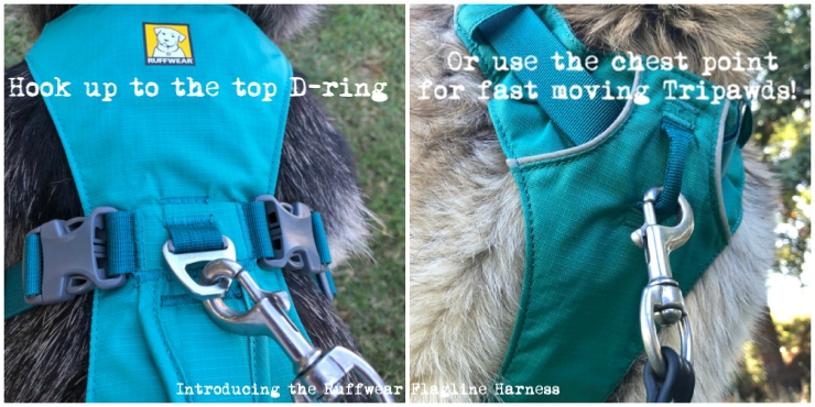No-pull Tripawd harness design