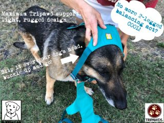 Flagline no-pull Tripawd harness design