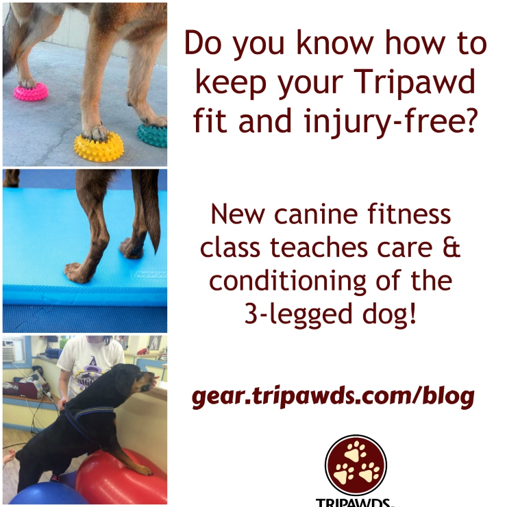 Tripod fitness class