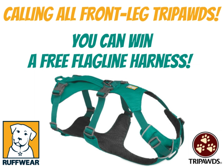 How to win a free Flagline harness