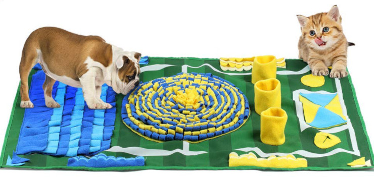 dog and cat brain games