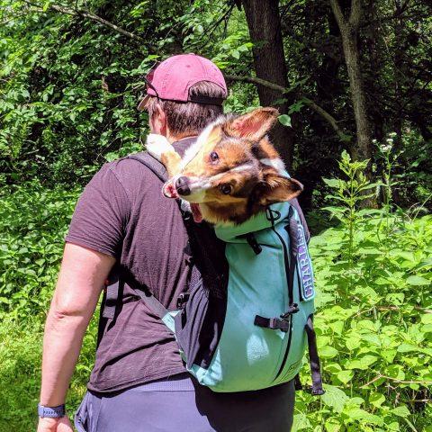 Tripawd hike dog back pack
