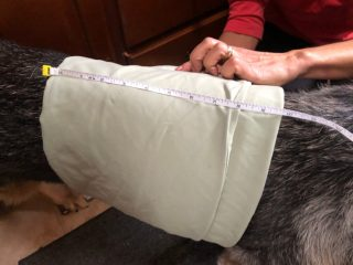 measure dogs for custom harness