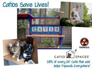 special needs catio plans