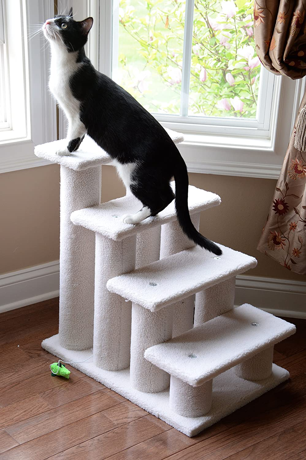 best Tripawd stairs for cats and dogs