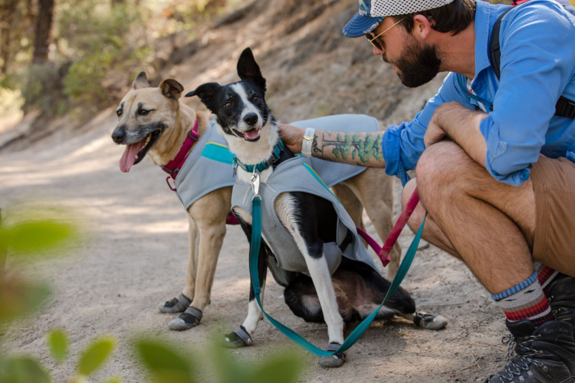 Cool Tripawds Wear Ruffwear Gear