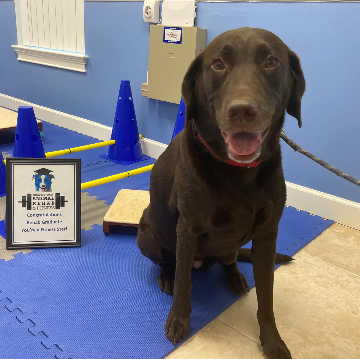 canine rehabilitation therapy and fitness