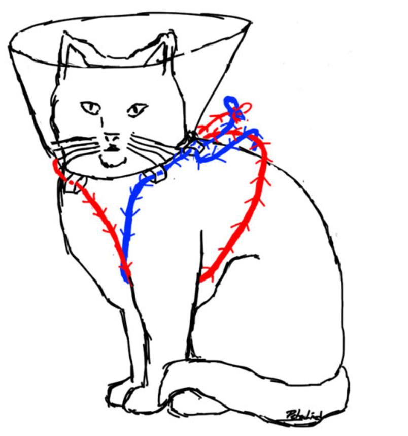 Houdini Cat Cone of Shame