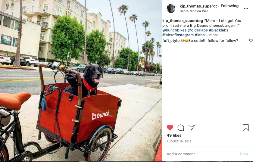 Kip Rides in the electric Dog Bike