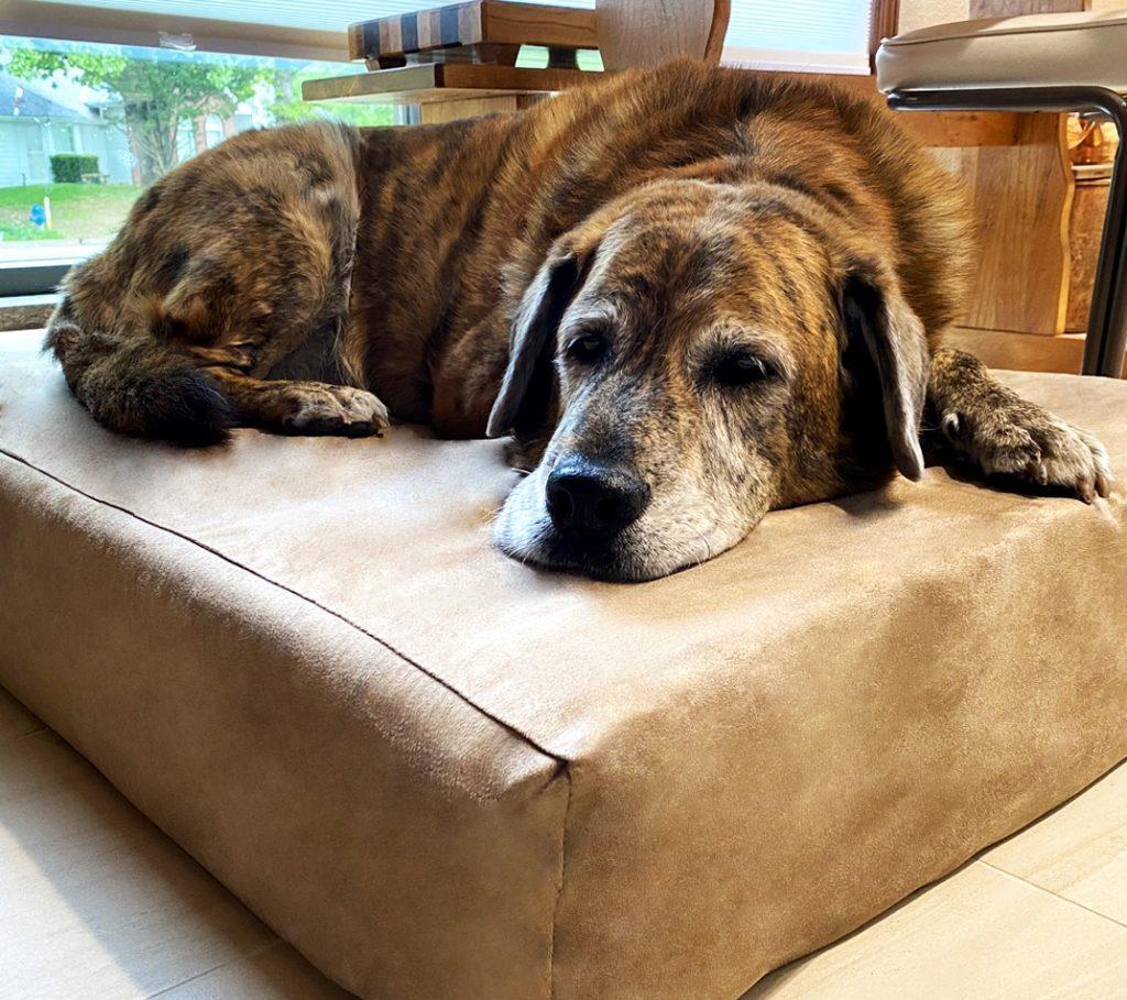 Tripawds Big Barker Dog Bed Giveaway