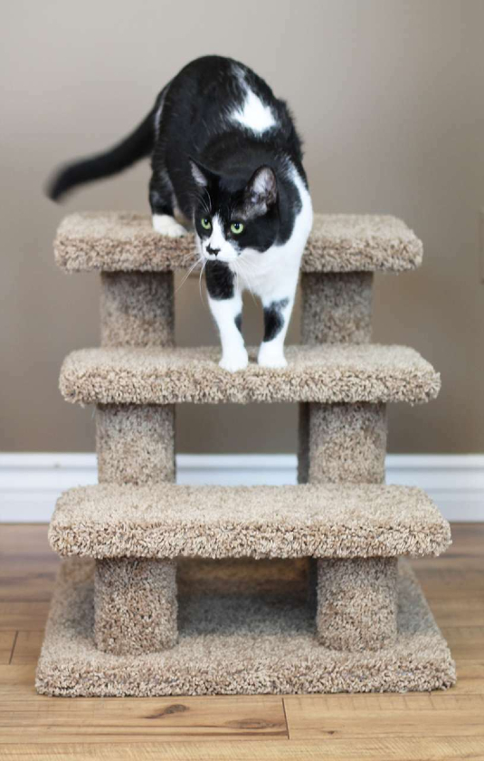 amputee cat pet stairs
