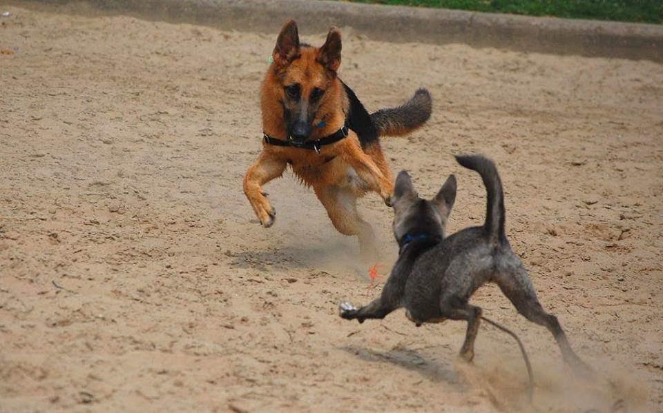 Tripawd dog safety