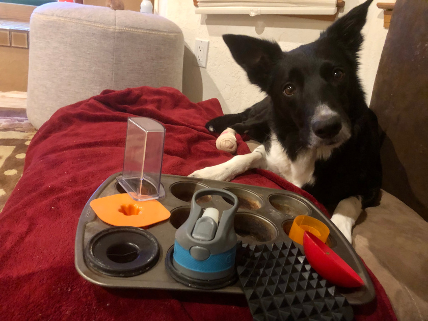 DIY dog recovery games