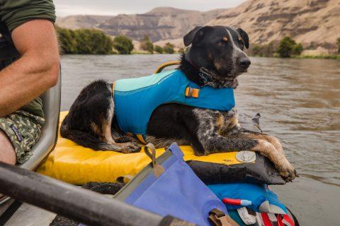 2021 Float Coat Happy Dog