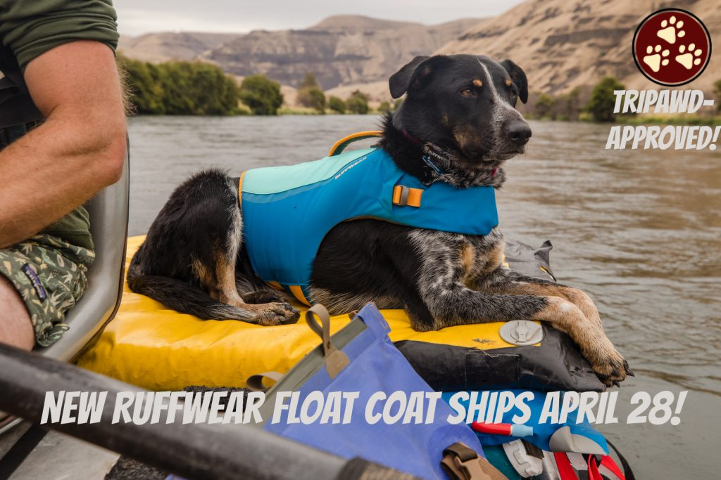Best Life Jacket for Tripawd Dogs