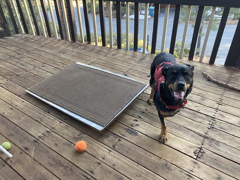 Tripawd exercise disc mod