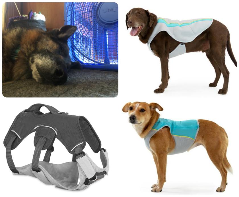 Keep Tripawd dogs cool