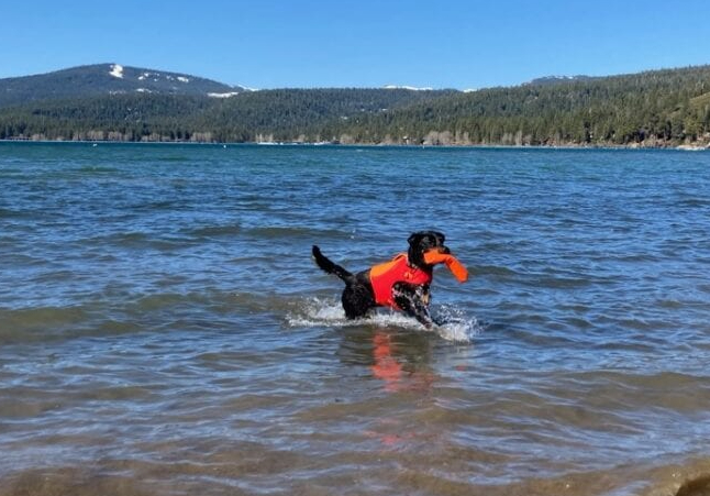 Tripawd safety swimming tips