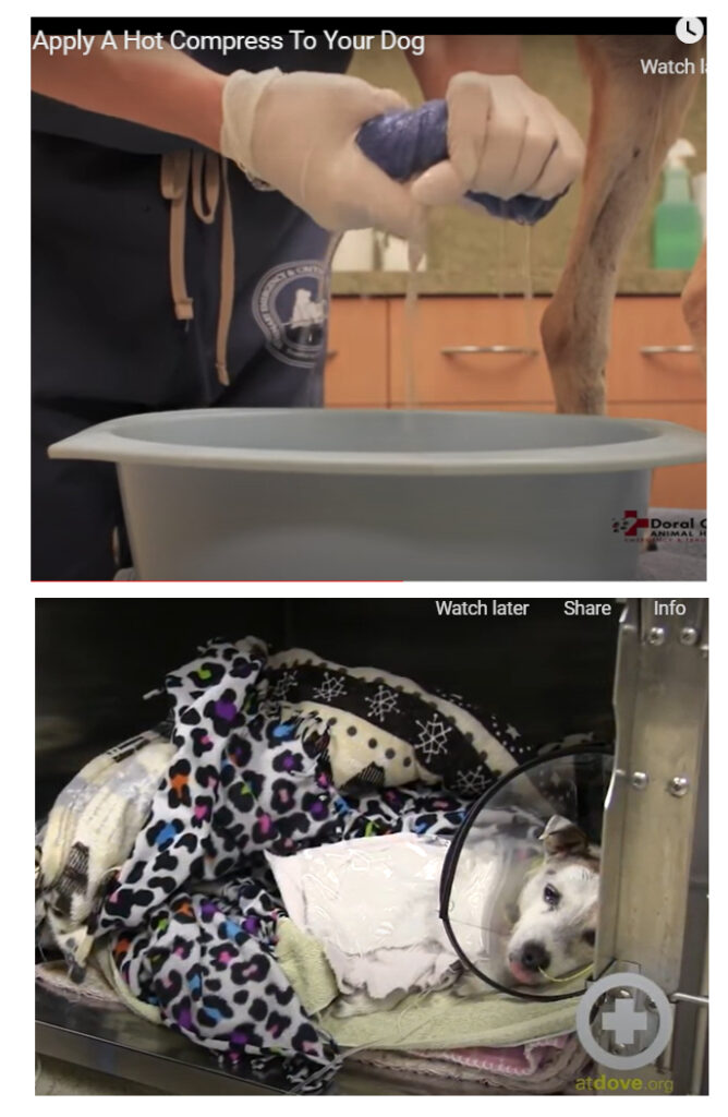 warm compress cold pack for pets