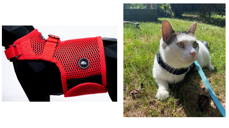 Tripawd Cat Harness Test