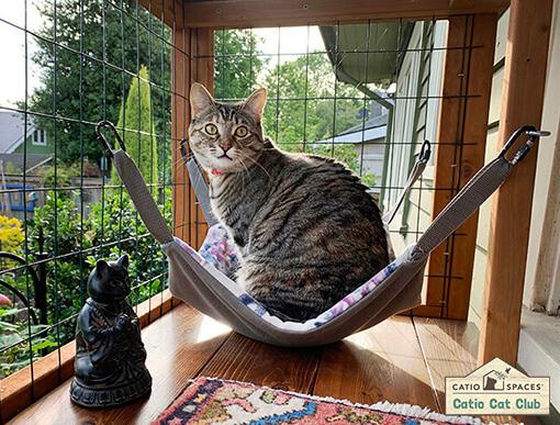 DIY outdoor cat enclosure project